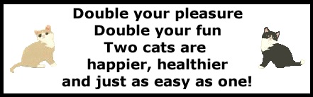 Kitty_two_cats_poem.png
